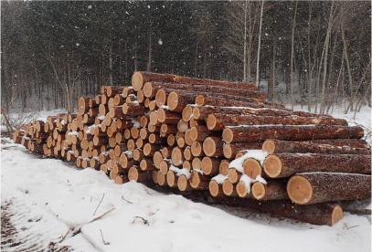 製材用原木