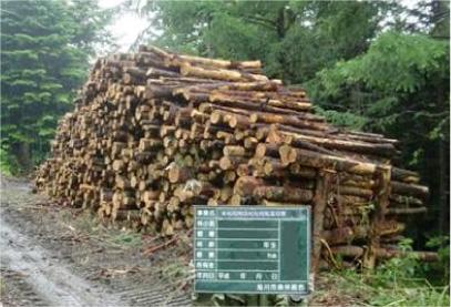 製紙用原木